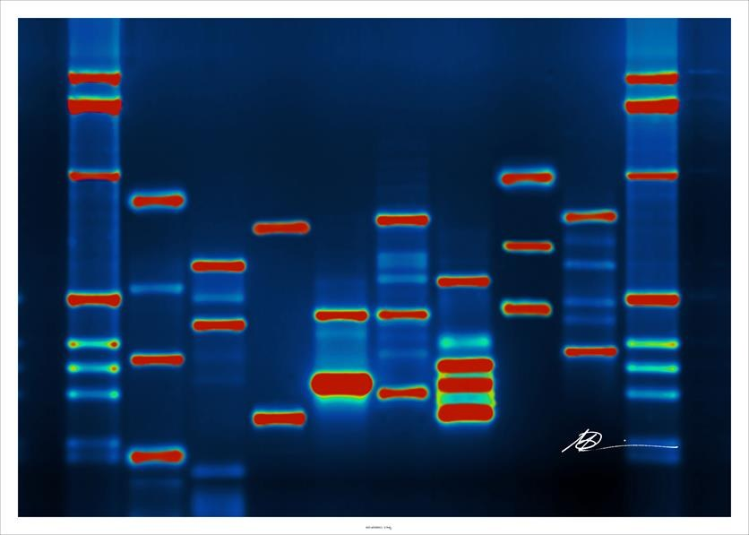 cloning DNA markers